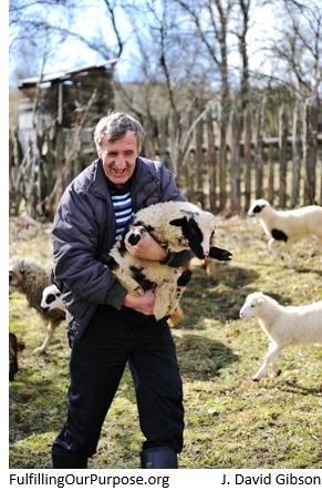 shepherd-tagged
