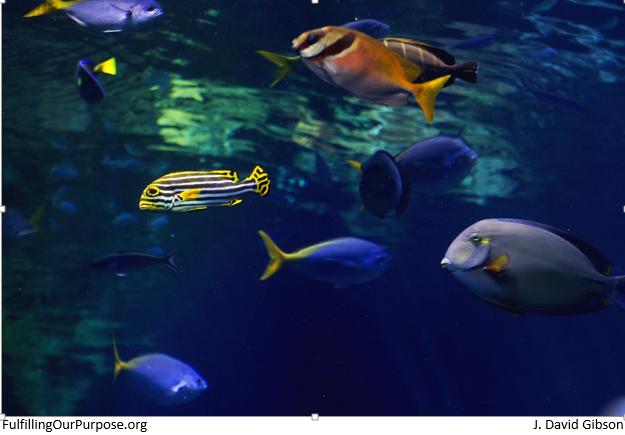 fish-tagged